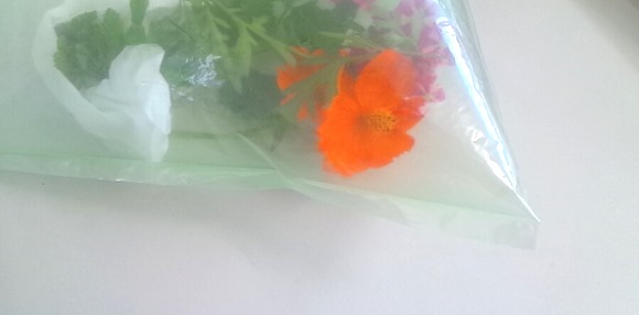 あいあいプラザ 押し花体験教室